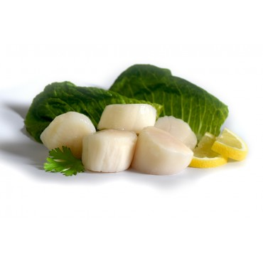 FROZEN LARGE SCALLOPS (ROE OFF)-500 Gm